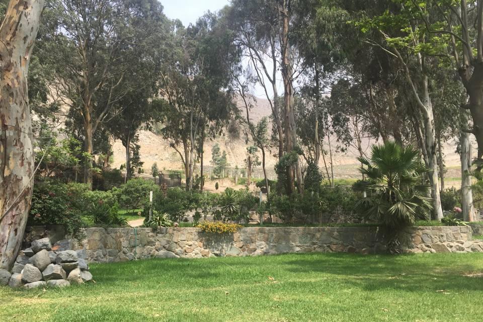 Jardines Molle Casal