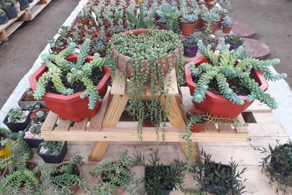 Mercedes Soto Garden